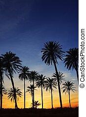 árboles de palma, ocaso, dorado, cielo azul, iluminar desde el fondo