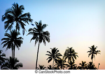 árboles de palma, ocaso, dorado, cielo azul, iluminar desde el fondo, en, mediterráneo