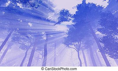 árboles de pino, basking, en, luz del sol