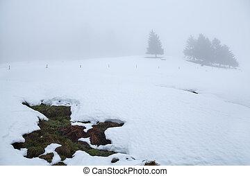 árboles, en, colina, en, invierno, niebla
