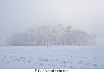 árboles, en, denso, invierno, niebla