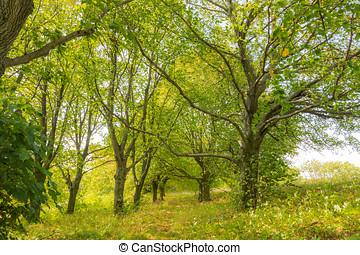 árboles, en, el, bosque, verano, viaje, a, parque nacional, árboles verdes, y, leafs