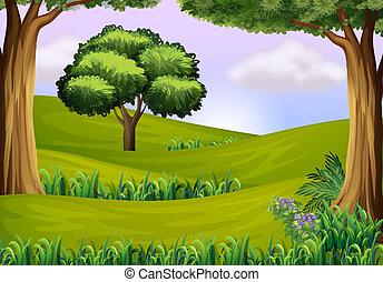 árboles, en, el, colinas