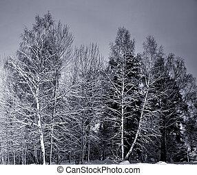 árboles, en, invierno, noche