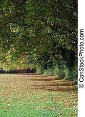 árboles, en, otoño