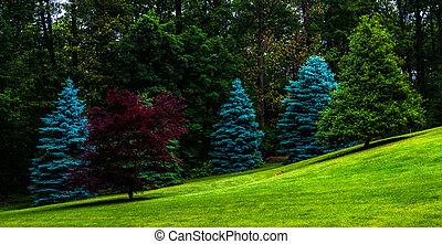 árboles, en, un, herboso, hill.