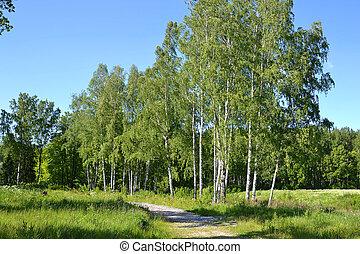 árboles, en, un, verano, forest.