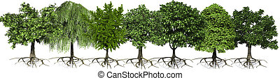 árboles, fila