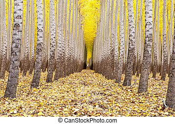árboles, granja, fila, otoño, todos