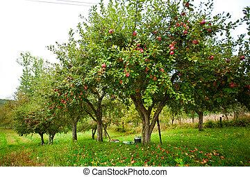 árboles, huerto de manzana