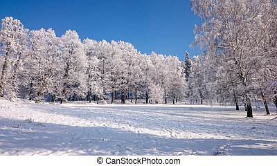 árboles invierno, en, montañas, cubierto, con, nieve fresca