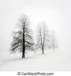 árboles invierno, en, niebla
