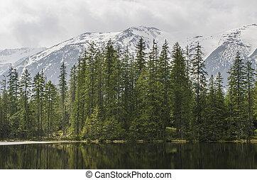 árboles., lago, montañas