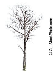 árboles., muerto