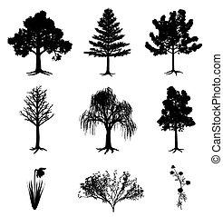 árboles, narciso, camomila, y, arbusto