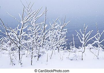 árboles, nevoso