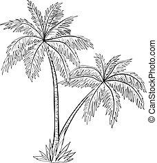 árboles, palma, contornos