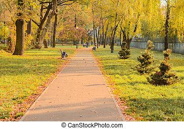 árboles, por, trayectoria, corre, parque, joven, crecer, ...
