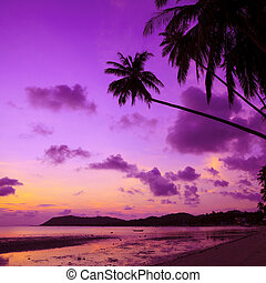 árboles, tropical, palma, tailandia, playa, ocaso