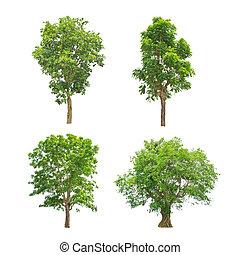 árboles verdes, colección, aislado