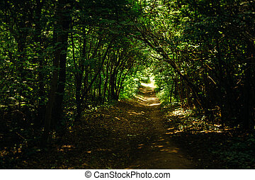 árboles verdes, en, el, bosque, en, el, luz del sol