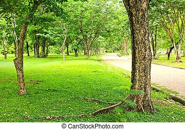 árboles verdes, en el estacionamiento