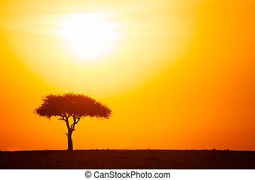 árnykép, közül, akác fa, ellen, drámai, napnyugta