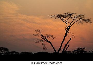 árnykép, közül, egy, fa, alatt, napkelte