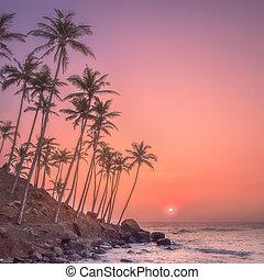 árnykép, közül, pálma fa, és, tengerpart, közben, napnyugta