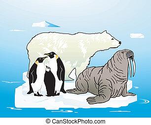 ártico, antártico