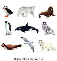 ártico, vector, animales, conjunto