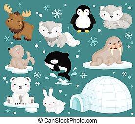 ártico, vector, conjunto, animal