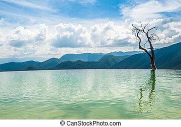 árvore, água, em, hierve, el, agua, natural, formações...