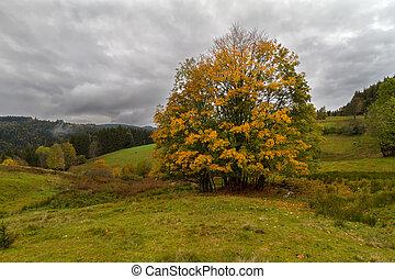 árvore, único, floresta outono, pretas, alemanha
