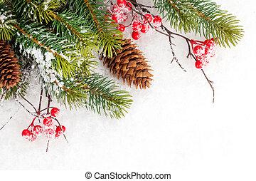 árvore abeto, baga, ramo, holly, natal
