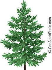 árvore abeto, isolado, verde, asseado, natal