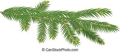 árvore abeto, isolado, verde, ramo, branca