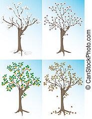 árvore abricó, e, a, estações