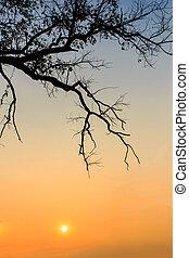 árvore, abstratos, silueta, ramos, amanhecer
