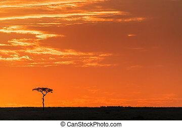 árvore, acácia, amanhecer, masai mara, horizonte