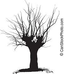árvore, acácia, poda