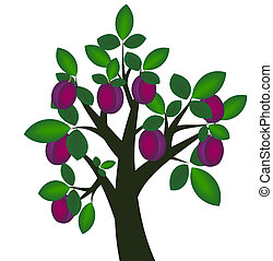 árvore ameixa
