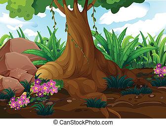 árvore, antigas, selva