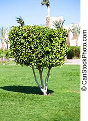 árvore, arbusto, jardim, um