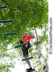 árvore, aventura, homem, parque, topo
