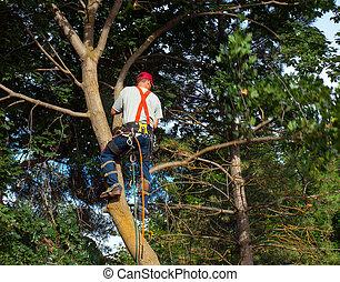 árvore, baixo, corte, arborist, pedaço, maple