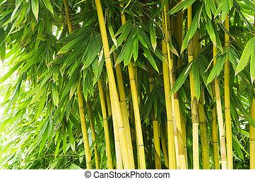 árvore, bambu