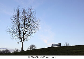 árvore, banco