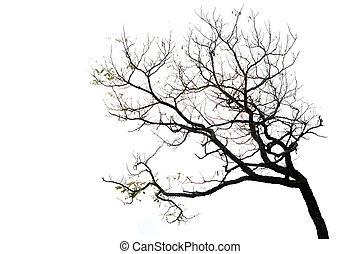 árvore, branca, ramos, isolado, fundo