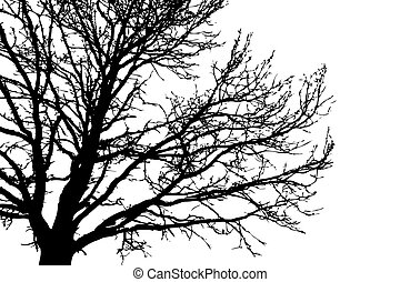 árvore, branca, vetorial, silueta, fundo